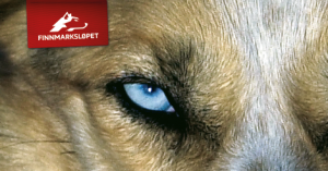 Finnmarksløpet logo tag with husky dog